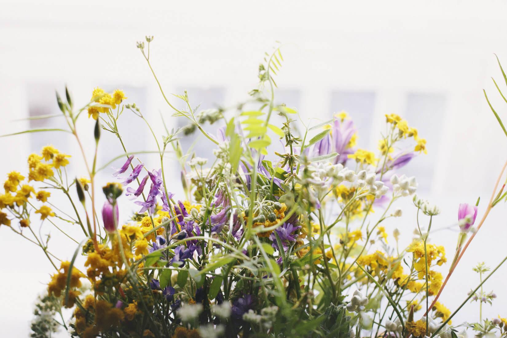 Цветотерапия: подборка городов с самой красивой весной
