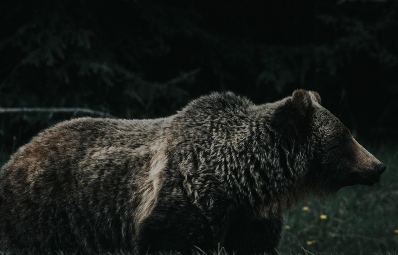 На всякий случай: как драться с медведем