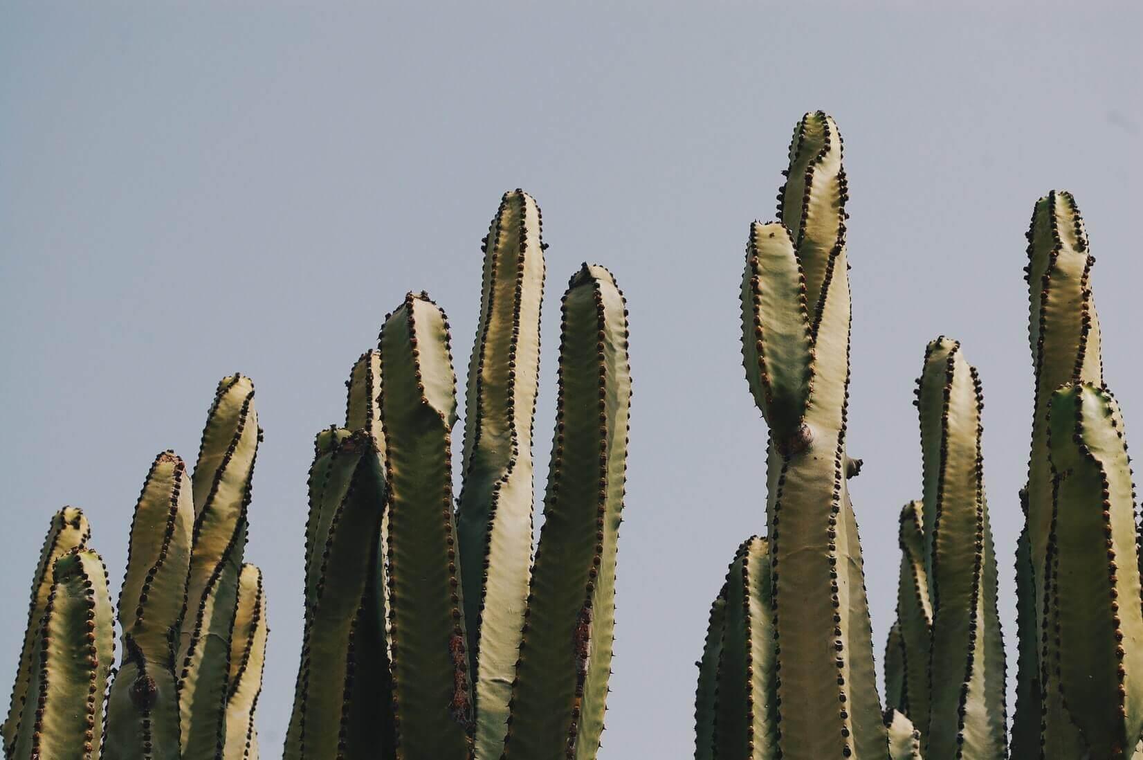Бюджет в Мехико: тако, текила, мариачи — полный комплект на 5 дней