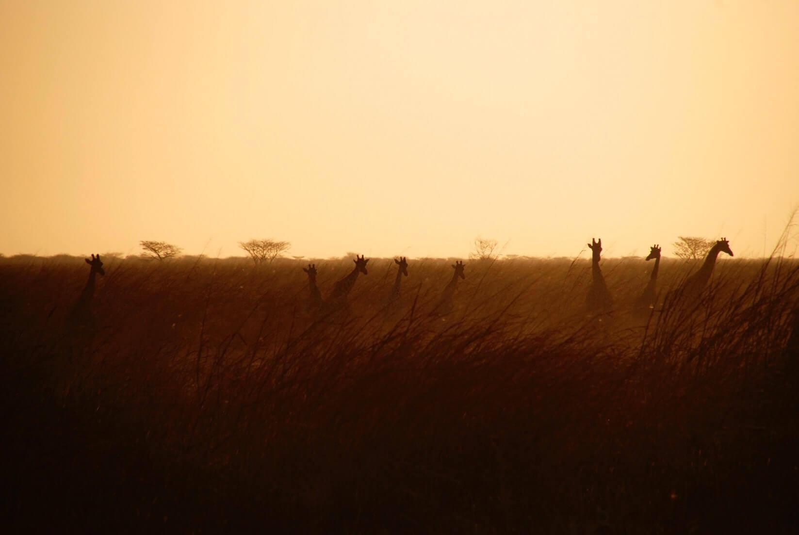 Африка от Найроби до Кейптауна: как мы за полтора месяца пересекли континент