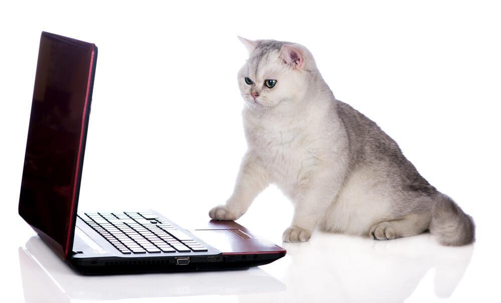 «Победа» разрешила провозить ноутбуки отдельно