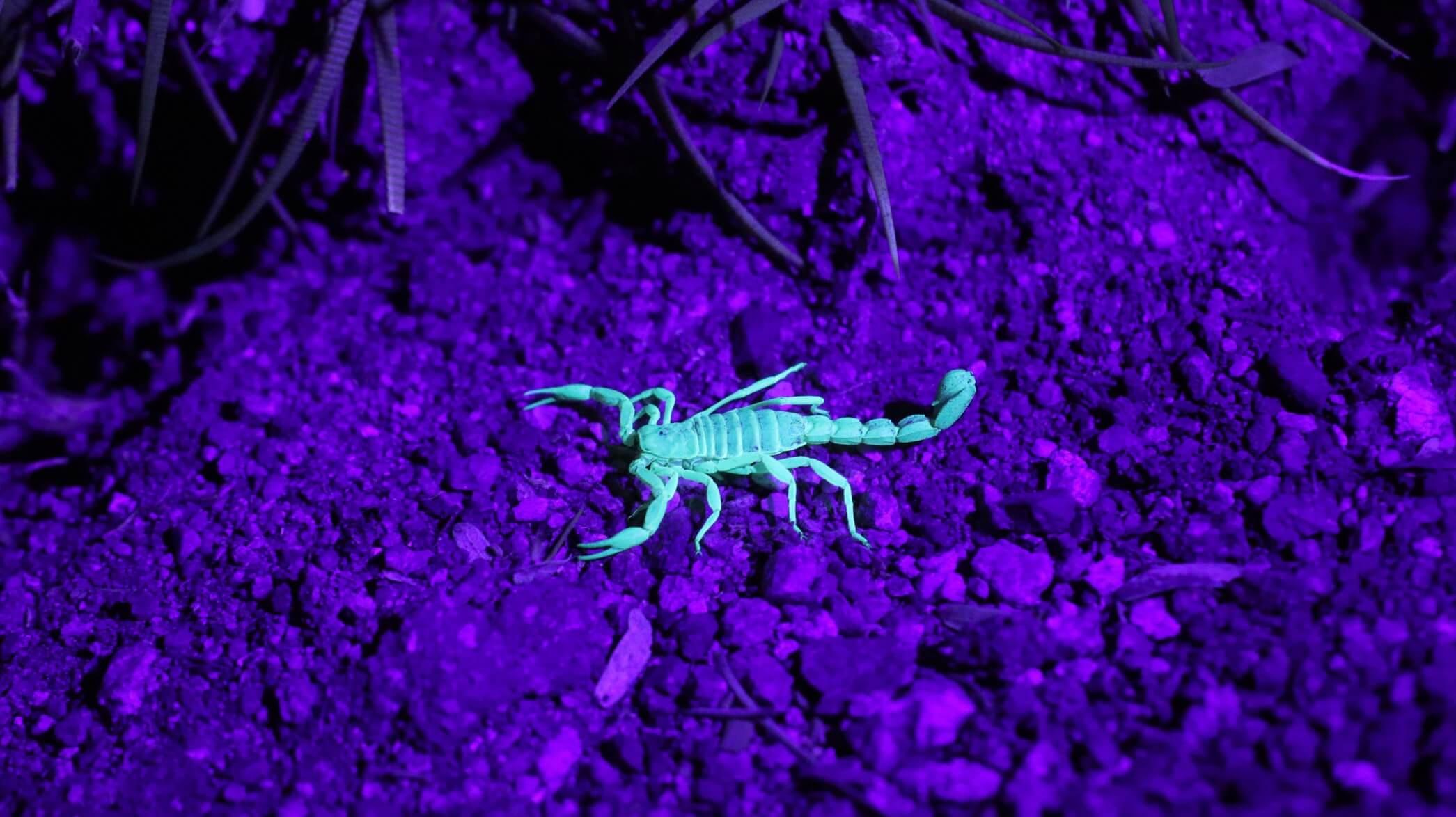 Пригодится, даже если вы — телец: как драться со скорпионом