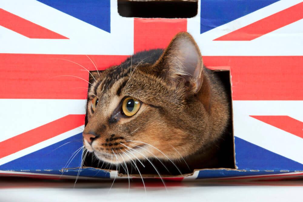 У меня пересадка в Лондоне:нужна ли британская виза