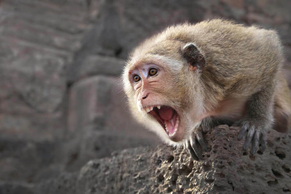 Когда противник слишком хорош: как драться с обезьяной