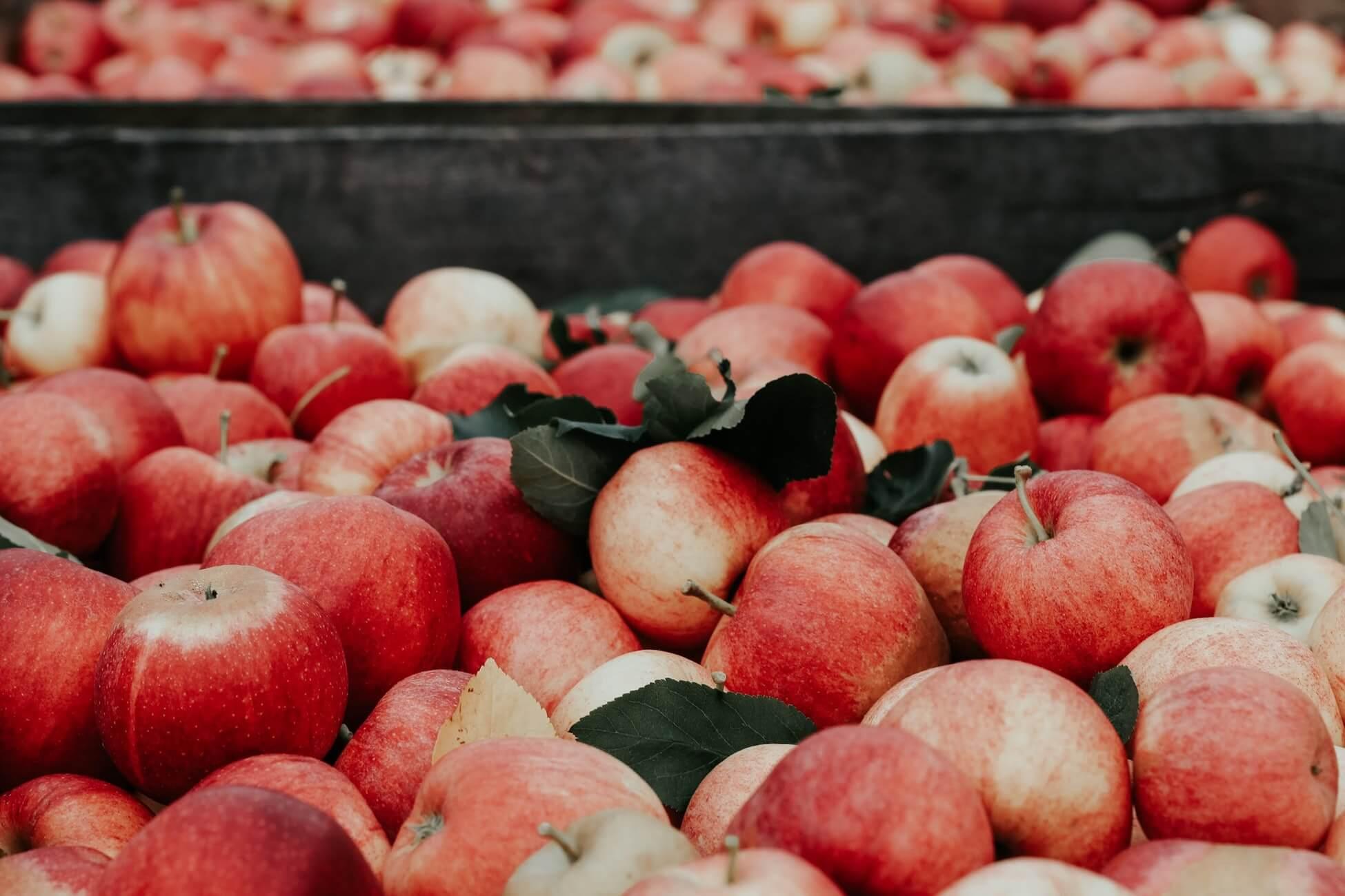 Ввозить запрещено: в Финляндию нельзя брать с собой даже яблоко