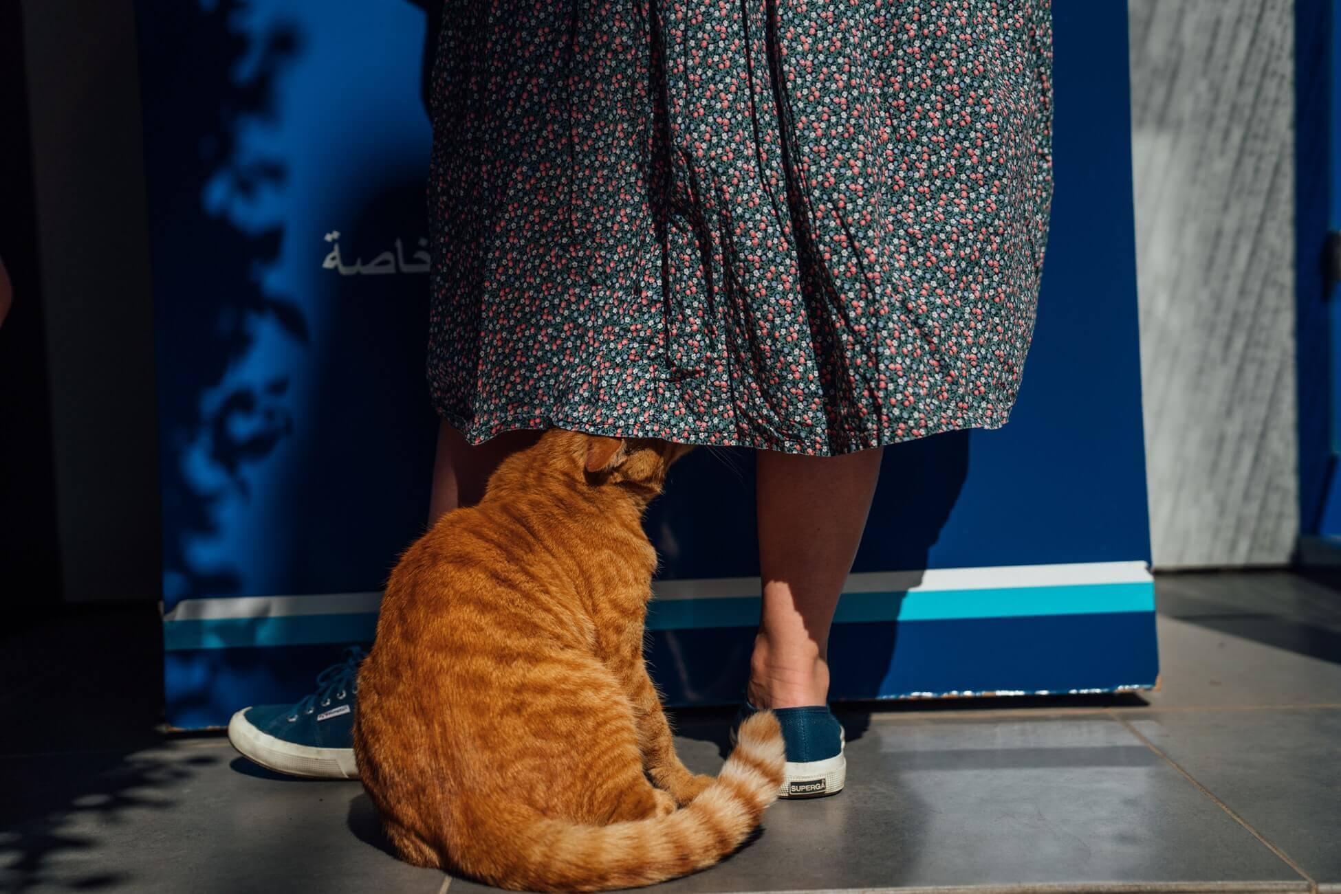 Я и лучший друг: неочевидные игры с котом дома