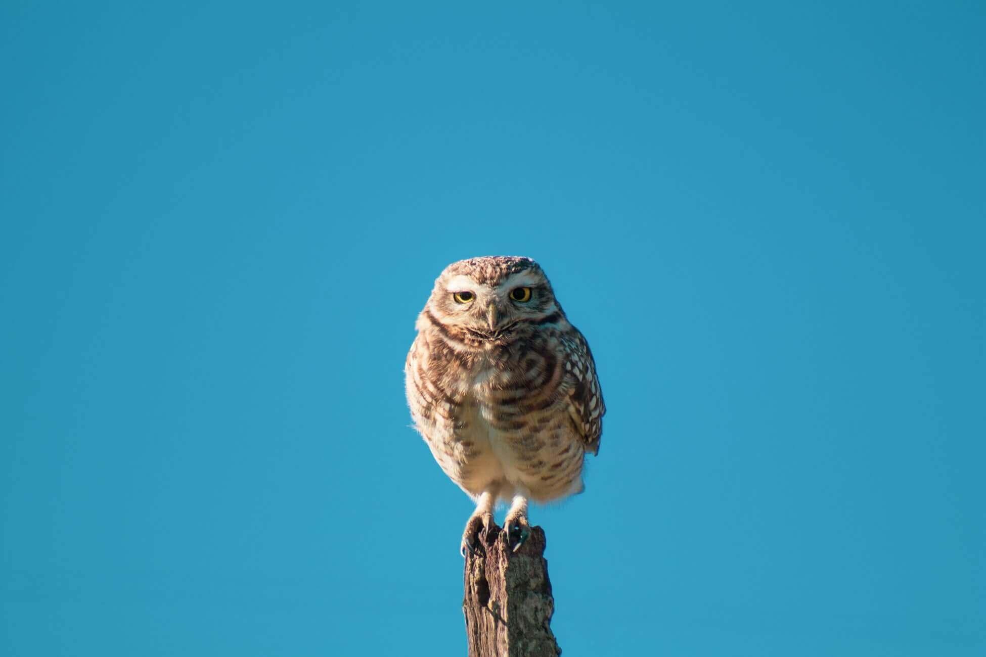 Час совы: ваш гороскоп на неделю